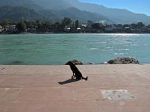 Ganga dog